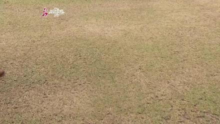 NZ vs SL - Pitch Report